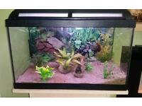 2ft fish tank with stand and all accessories ready for fish
