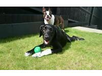 Reliable dog walker sitter Brighton Hove One to One dog walking groups, pet sitting, day care
