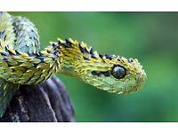 Matts Reptile rescue