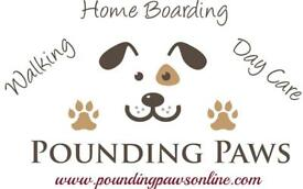 Dog Walking, day care and Home Boarding