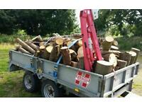 CHEAP bulk load of tree lengths - Logs Firewood Timber Tree Lengths - Large Amount