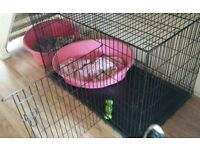 wire dog cage x large H-31 inch, L-49 inch, W- 29 inch