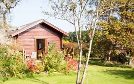 £100 off your week in Cornwall this summer- Cherry Tree Cabin - sleeps 2 - Dog friendly