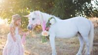 PONY RIDES, BIRTHDAY PARTIES AND EVENTS