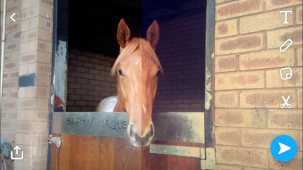 Wanted: Horse/Pony