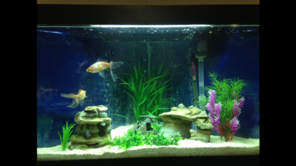 Corner fishtank with accessories