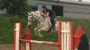 Quality Horses available for part board/lease/sale