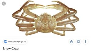 Wanted to buy a snow crab license