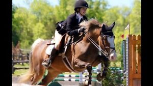 Horses for sale lease or lease