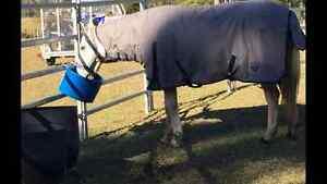 Grey gelding for sale Richmond Valley Preview