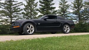 SAFETIED 2009 Mustang