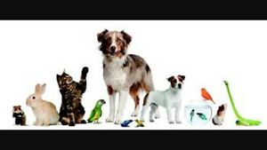 Dog sitting South Yunderup Mandurah Area Preview