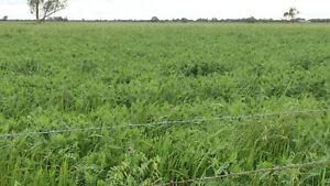 Oats, Vetch & Ryegrass Hay Echuca Campaspe Area Preview
