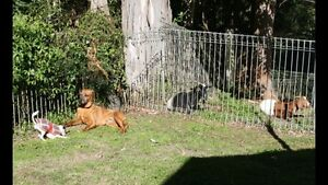Dog cat bird chooks animal and house sitting Warners Bay Lake Macquarie Area Preview