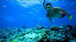 WANTED: Snorkelling Gear