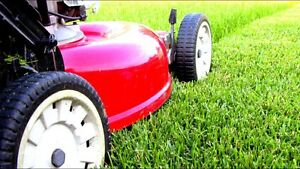 Rubbish removal / lawns / gardening - SAVE $$$$$$ Burleigh Heads Gold Coast South Preview