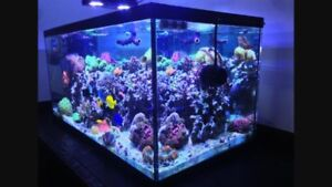 187 gallon salt water tank with steel stand