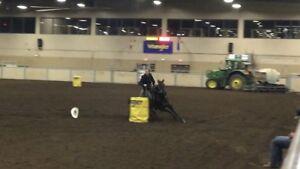 True Black Barrel/rodeo horse!