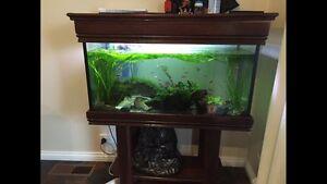 Fish tank 220L***MAKE AN OFFER*** Reservoir Darebin Area Preview