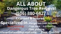 Tree cutting &Dangerous Tree Removal. Cheap rates