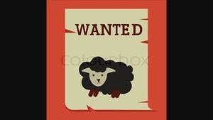 Will pick up any unwanted sheep or goats  Edmonton Edmonton Area image 2