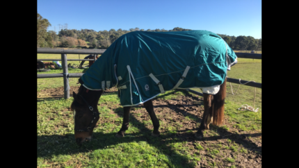 Go Horse Fleece Lined Combo