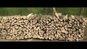 Looking for dry wood for camping  fires.