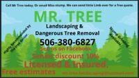 Tree cutting licensed/insured