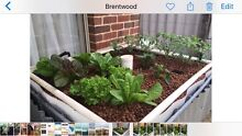 Aquaponics system Brentwood Melville Area Preview