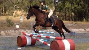 Stunning Mare with potential plus Nabiac Great Lakes Area Preview