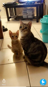 Adorable young cats looking for loving home