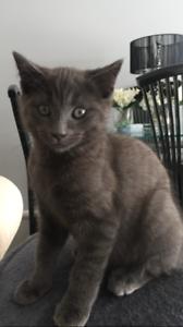 Finn - Kitten for Adoption!