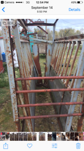 Cattle chutte for sale