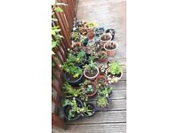 Selection of garden plant free for uplift.PENDING COLLECTION .
