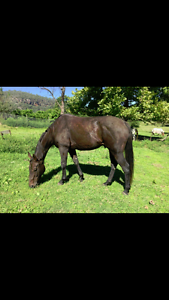 WB x TB WITH POTENTIAL TO BURST Hawkesbury Area Preview
