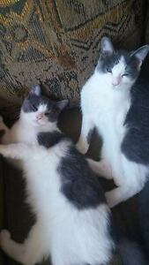 Kittens free to forever home
