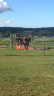 Agistment Beaudesert from $35pw arena stables roundyard Mundoolun Logan Area Preview