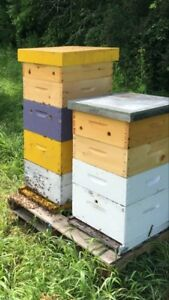 Honey Beehive/ Ruches d'abeilles kit & bee colony- Beekeeping
