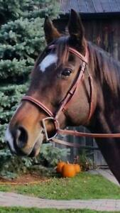 Lovely TB Mare for Sale!