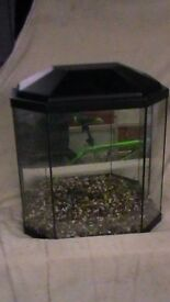 nice sized fish tank not too big with mirrored back