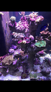All types of CORALS FOR SALE! MUST GO!