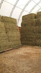 1st cut 2017 large squares of hay