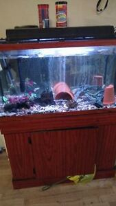 Fish tank and Stand And  10 or 11  african cichlid's