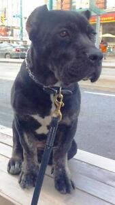 KLAWS: 1 of 3 Stolen Dogs Still Missing:Contact OPP if any info