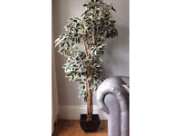Artificial Tall Ivy Plant RRP £199