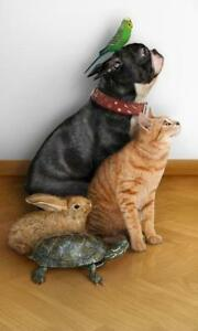 In your Pets home/   Caregiver