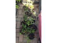 Collection of 12 small shrub plants for the garden