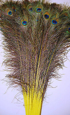 100 Pcs Dyed Peacock Feathers 35-40 Yellow; Crafts/art/dress/bridal/costume