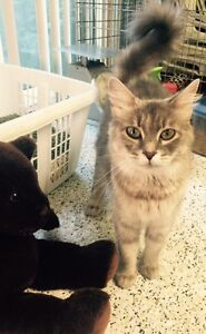 RESCUED A REMARKABLE CAT LOOKING FOR EQUALLY REMARKABLE HOME!