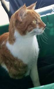 KLAWS: FOUND May 17th 2017 Mary St W,Lindsay contact HSKL